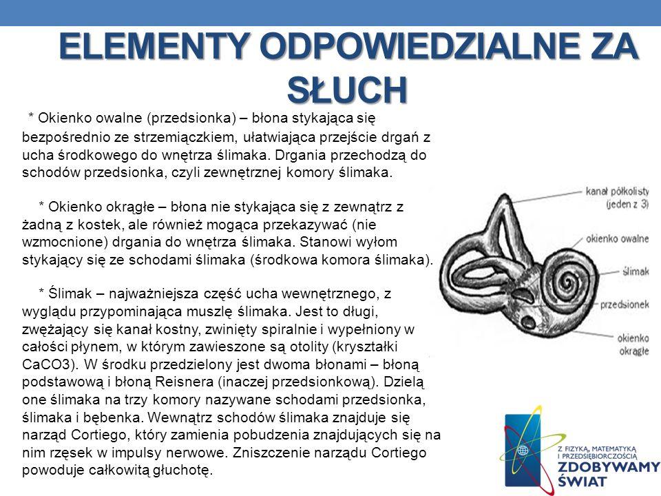 ELEMENTY ODPOWIEDZIALNE ZA SŁUCH * Okienko owalne (przedsionka) – błona stykająca się bezpośrednio ze strzemiączkiem, ułatwiająca przejście drgań z uc