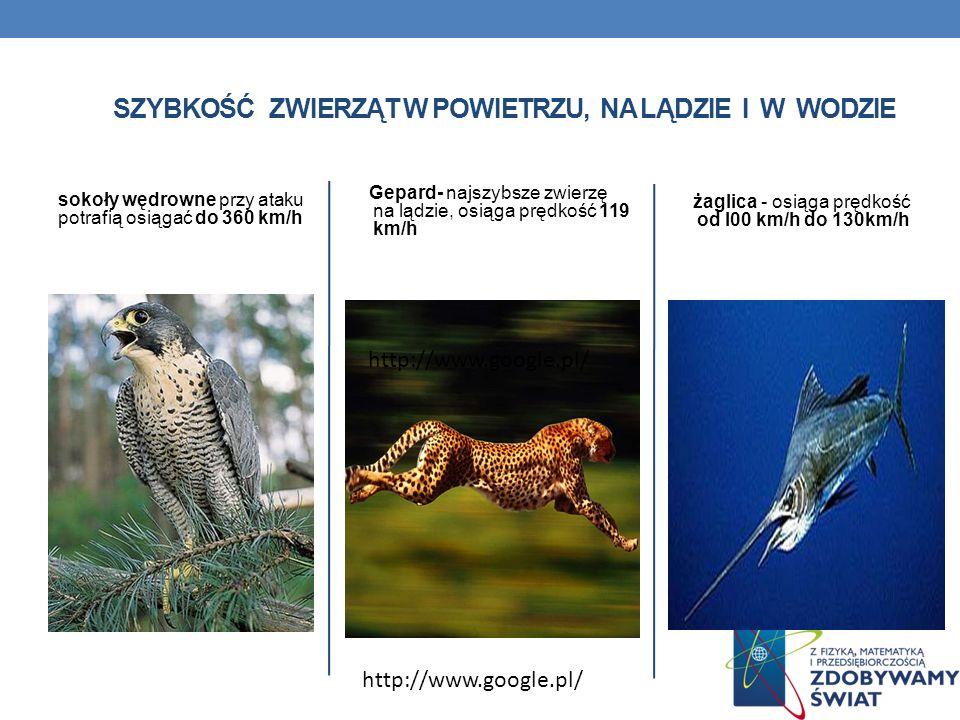 sokoły wędrowne przy ataku potrafią osiągać do 360 km/h Gepard- najszybsze zwierzę na lądzie, osiąga prędkość 119 km/h żaglica - osiąga prędkość od l0