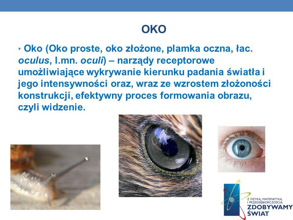 OKO Oko (Oko proste, oko złożone, plamka oczna, łac. oculus, l.mn. oculi) – narządy receptorowe umożliwiające wykrywanie kierunku padania światła i je