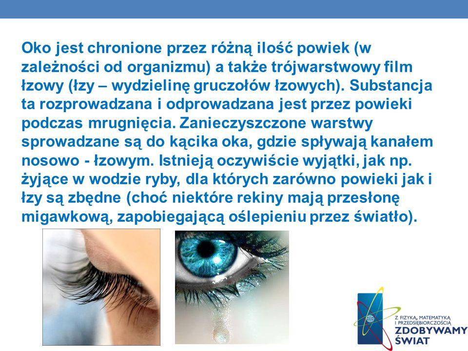 Oko jest chronione przez różną ilość powiek (w zależności od organizmu) a także trójwarstwowy film łzowy (łzy – wydzielinę gruczołów łzowych). Substan