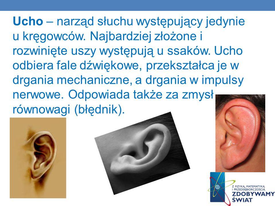 Ucho – narząd słuchu występujący jedynie u kręgowców. Najbardziej złożone i rozwinięte uszy występują u ssaków. Ucho odbiera fale dźwiękowe, przekszta