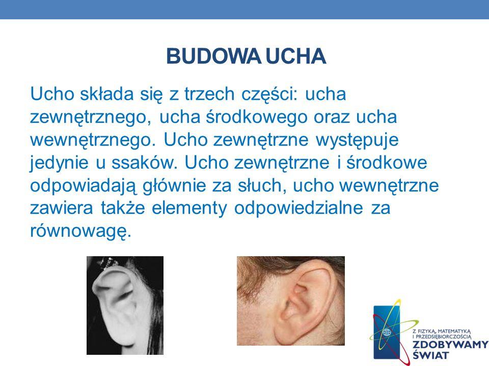 BUDOWA UCHA Ucho składa się z trzech części: ucha zewnętrznego, ucha środkowego oraz ucha wewnętrznego. Ucho zewnętrzne występuje jedynie u ssaków. Uc