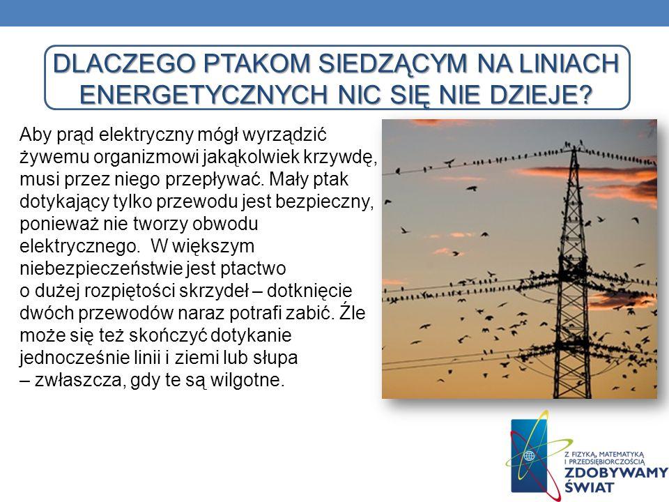 DLACZEGO PTAKOM SIEDZĄCYM NA LINIACH ENERGETYCZNYCH NIC SIĘ NIE DZIEJE? Aby prąd elektryczny mógł wyrządzić żywemu organizmowi jakąkolwiek krzywdę, mu