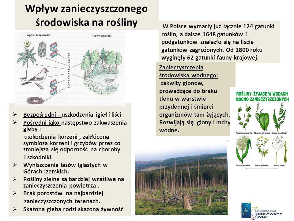 Wpływ zanieczyszczonego środowiska na rośliny Bezpośredni - uszkodzenia igieł i liści. Pośredni jako następstwo zakwaszenia gleby : uszkodzenia korzen