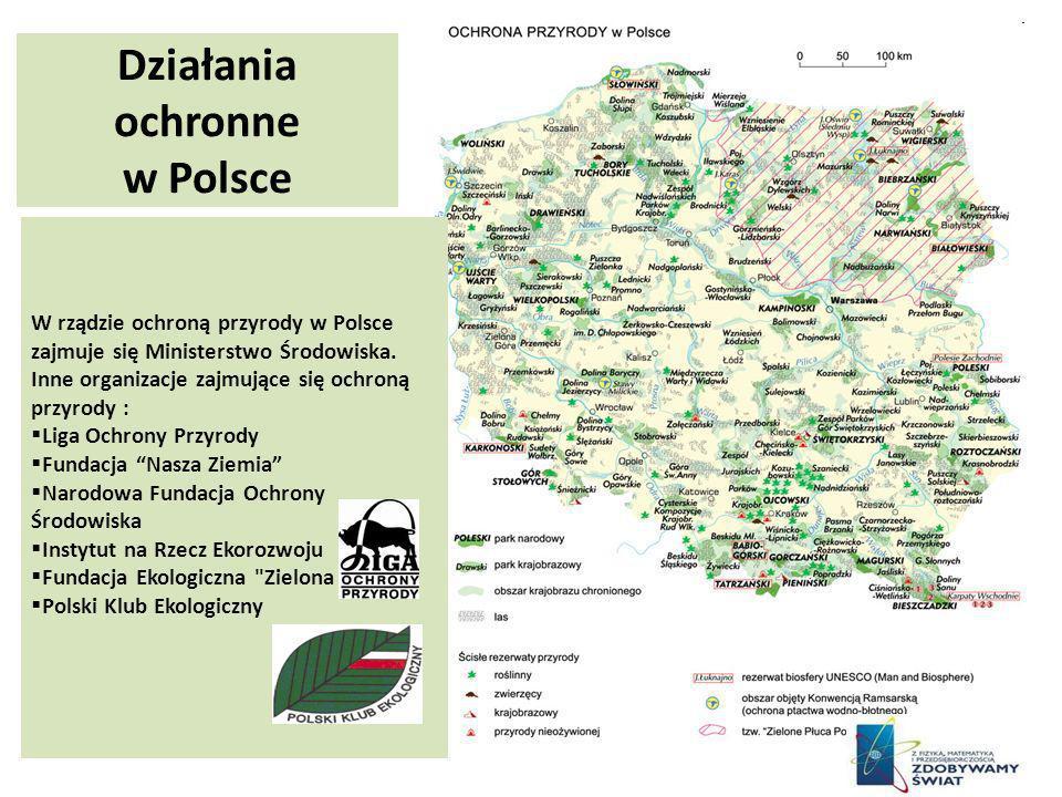 Działania ochronne w Polsce W rządzie ochroną przyrody w Polsce zajmuje się Ministerstwo Środowiska. Inne organizacje zajmujące się ochroną przyrody :