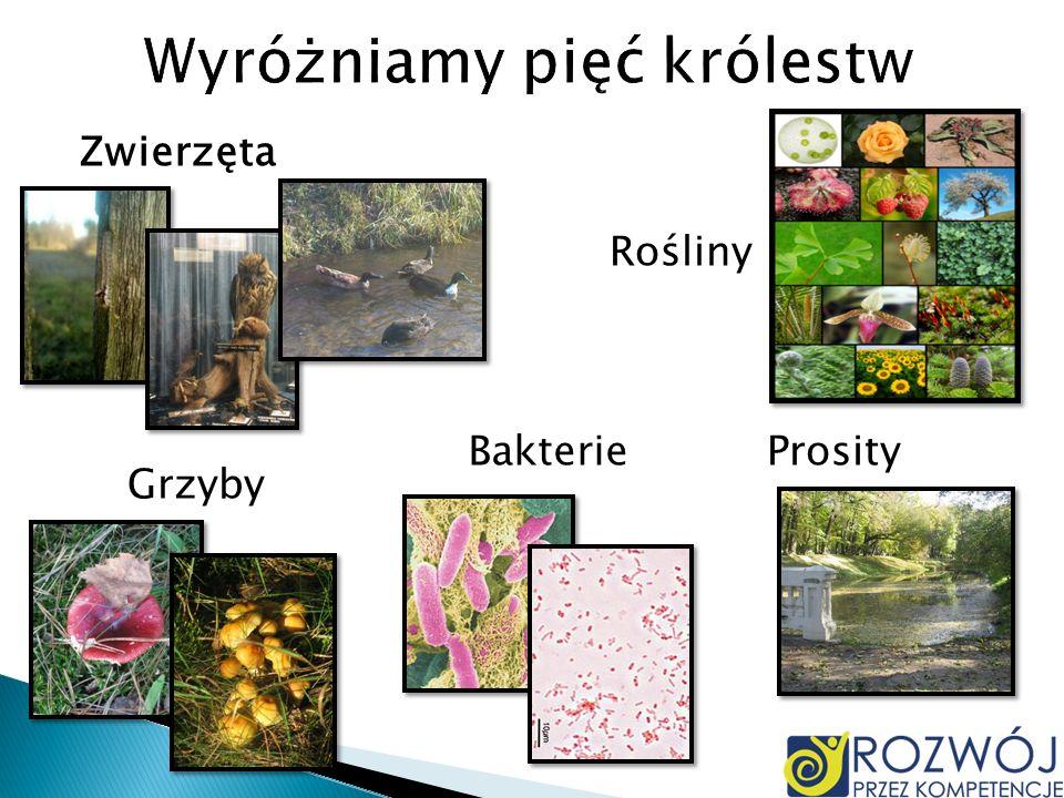Zwierzęta Rośliny Grzyby BakterieProsity