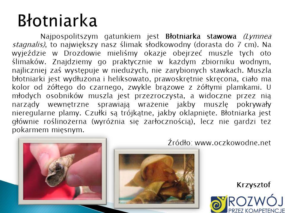 Najpospolitszym gatunkiem jest Błotniarka stawowa (Lymnea stagnalis), to największy nasz ślimak słodkowodny (dorasta do 7 cm). Na wyjeździe w Drozdowi