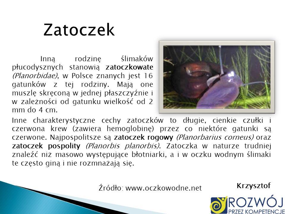 Inną rodzinę ślimaków płucodysznych stanowią zatoczkowate (Planorbidae), w Polsce znanych jest 16 gatunków z tej rodziny. Mają one muszlę skręconą w j