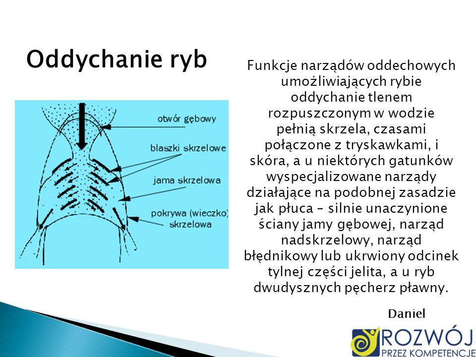 Funkcje narządów oddechowych umożliwiających rybie oddychanie tlenem rozpuszczonym w wodzie pełnią skrzela, czasami połączone z tryskawkami, i skóra,
