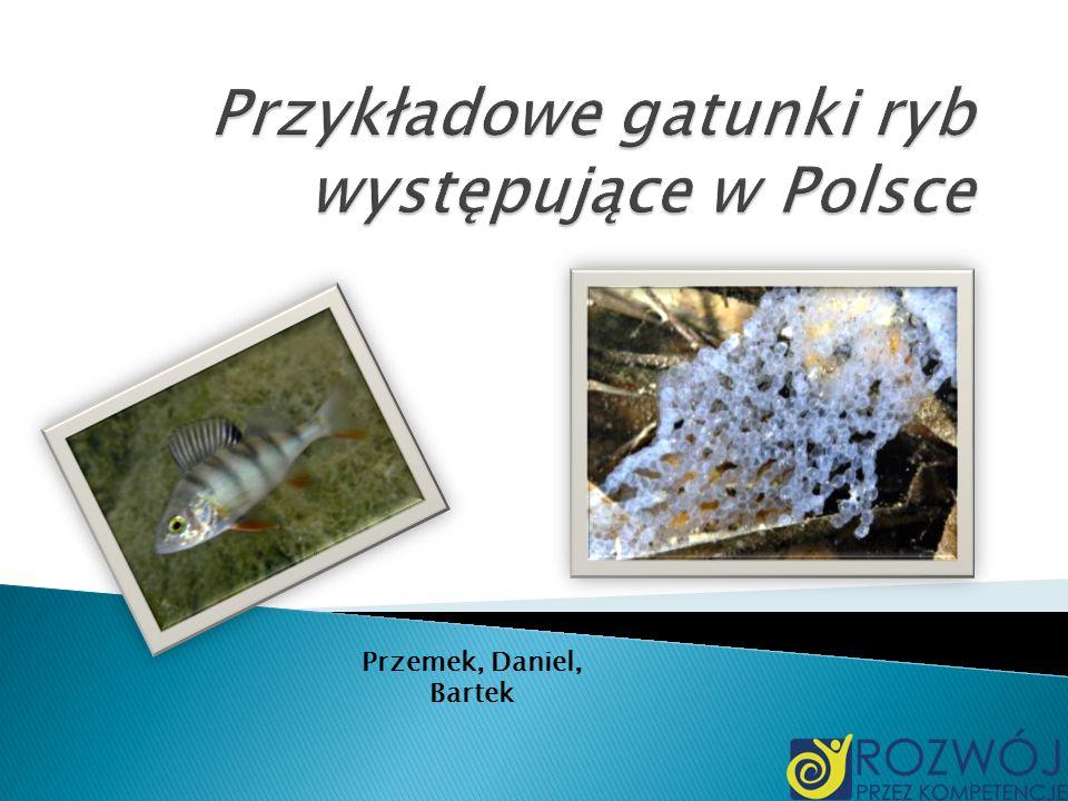 Przemek, Daniel, Bartek