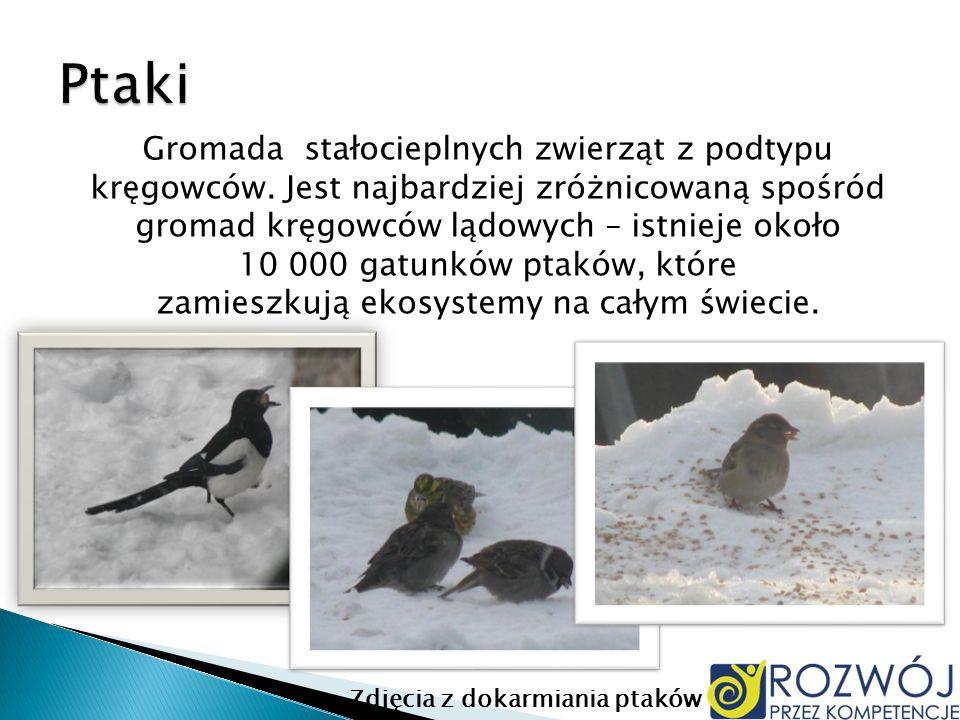 Gromada stałocieplnych zwierząt z podtypu kręgowców. Jest najbardziej zróżnicowaną spośród gromad kręgowców lądowych – istnieje około 10 000 gatunków
