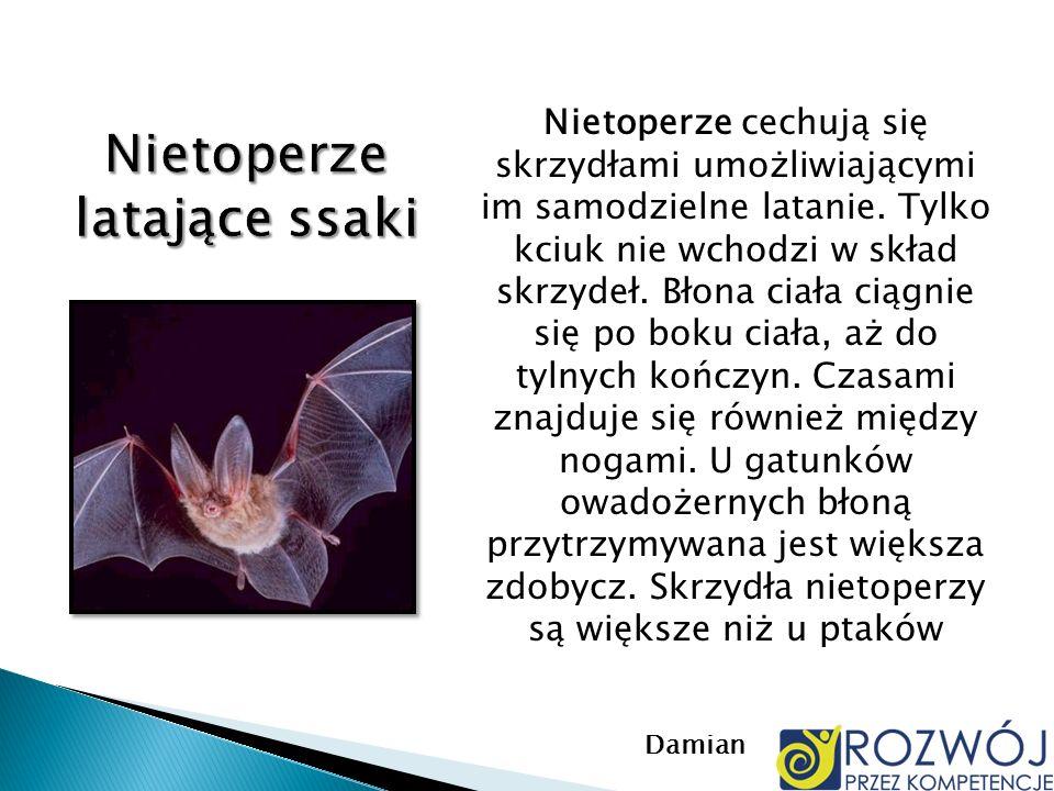 Nietoperze cechują się skrzydłami umożliwiającymi im samodzielne latanie. Tylko kciuk nie wchodzi w skład skrzydeł. Błona ciała ciągnie się po boku ci