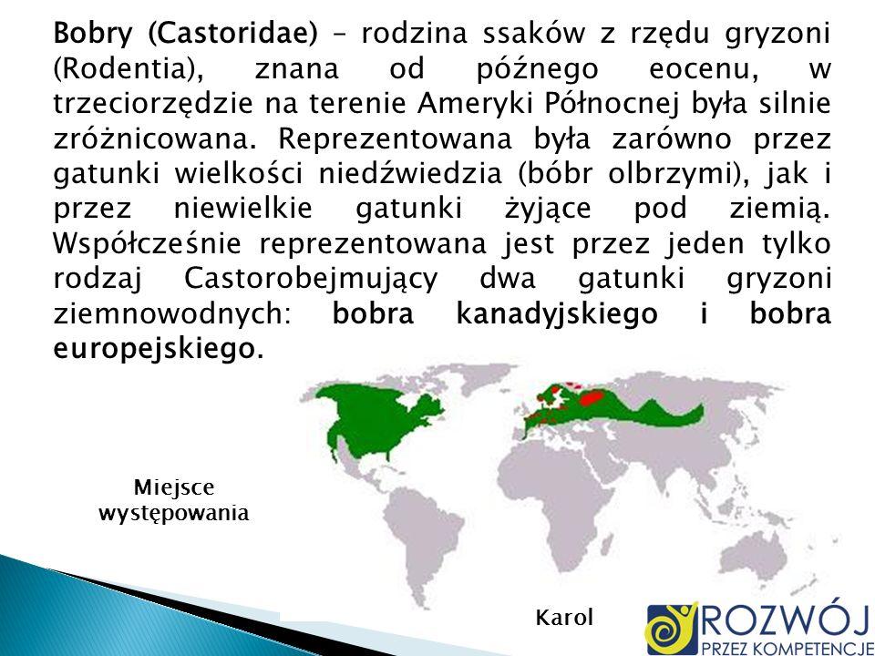 Bobry (Castoridae) – rodzina ssaków z rzędu gryzoni (Rodentia), znana od późnego eocenu, w trzeciorzędzie na terenie Ameryki Północnej była silnie zró