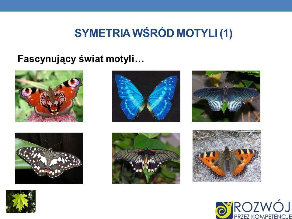 SYMETRIA WŚRÓD MOTYLI (1) Fascynujący świat motyli…