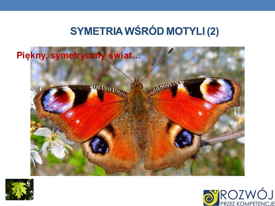 SYMETRIA WŚRÓD MOTYLI (2) Piękny, symetryczny świat…