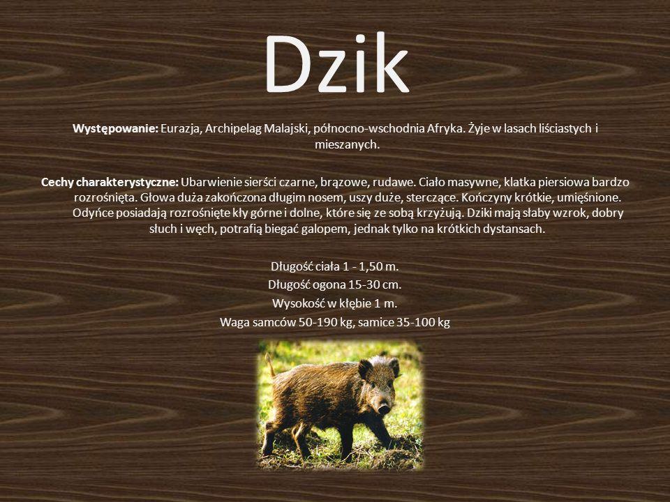 Występowanie: Eurazja, Archipelag Malajski, północno-wschodnia Afryka. Żyje w lasach liściastych i mieszanych. Cechy charakterystyczne: Ubarwienie sie