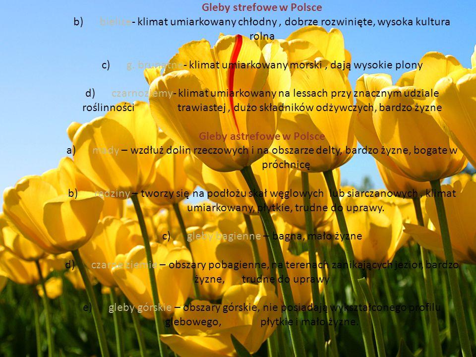 Gleby strefowe w Polsce b) bielice- klimat umiarkowany chłodny, dobrze rozwinięte, wysoka kultura rolna c) g. brunatne- klimat umiarkowany morski, daj