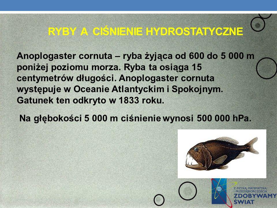 RYBY A CIŚNIENIE HYDROSTATYCZNE Anoplogaster cornuta – ryba żyjąca od 600 do 5 000 m poniżej poziomu morza. Ryba ta osiąga 15 centymetrów długości. An