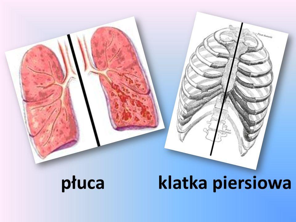 płucaklatka piersiowa