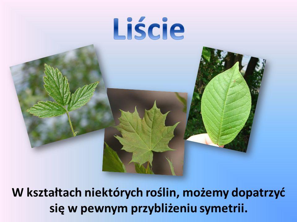 W kształtach niektórych roślin, możemy dopatrzyć się w pewnym przybliżeniu symetrii.