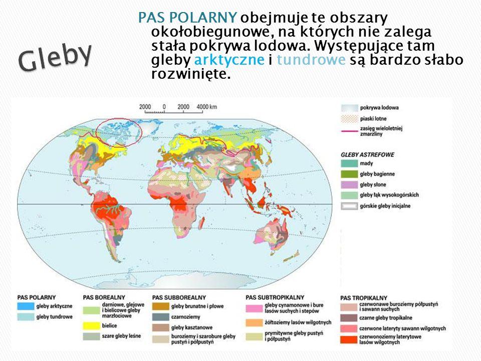 Prymitywne gleby typowe dla obszarów polarnych.