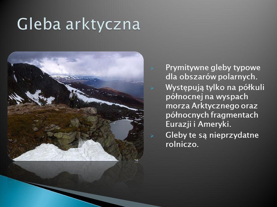 Prymitywne gleby typowe dla obszarów polarnych. Występują tylko na półkuli północnej na wyspach morza Arktycznego oraz północnych fragmentach Eurazji