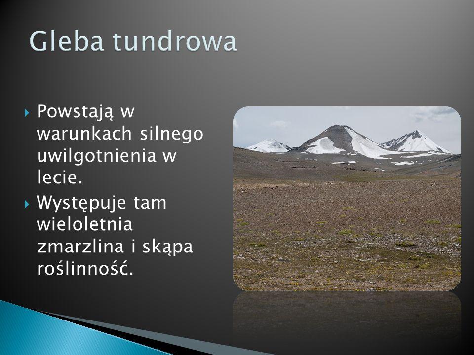 Występuje w strefie okołobiegunowej, na obszarach nie pokrytych lodem.