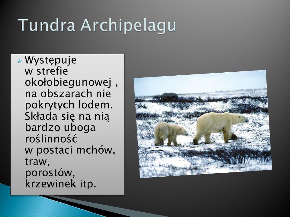 Występuje w strefie okołobiegunowej, na obszarach nie pokrytych lodem. Składa się na nią bardzo uboga roślinność w postaci mchów, traw, porostów, krze