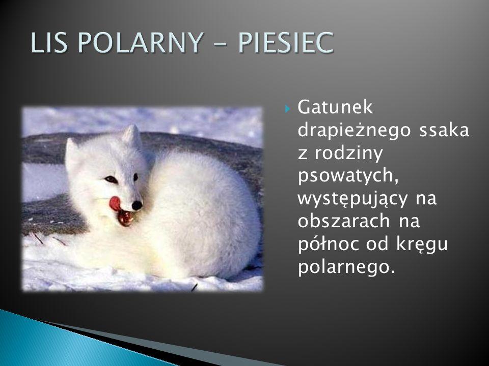Gatunek drapieżnego ssaka z rodziny psowatych, występujący na obszarach na północ od kręgu polarnego.