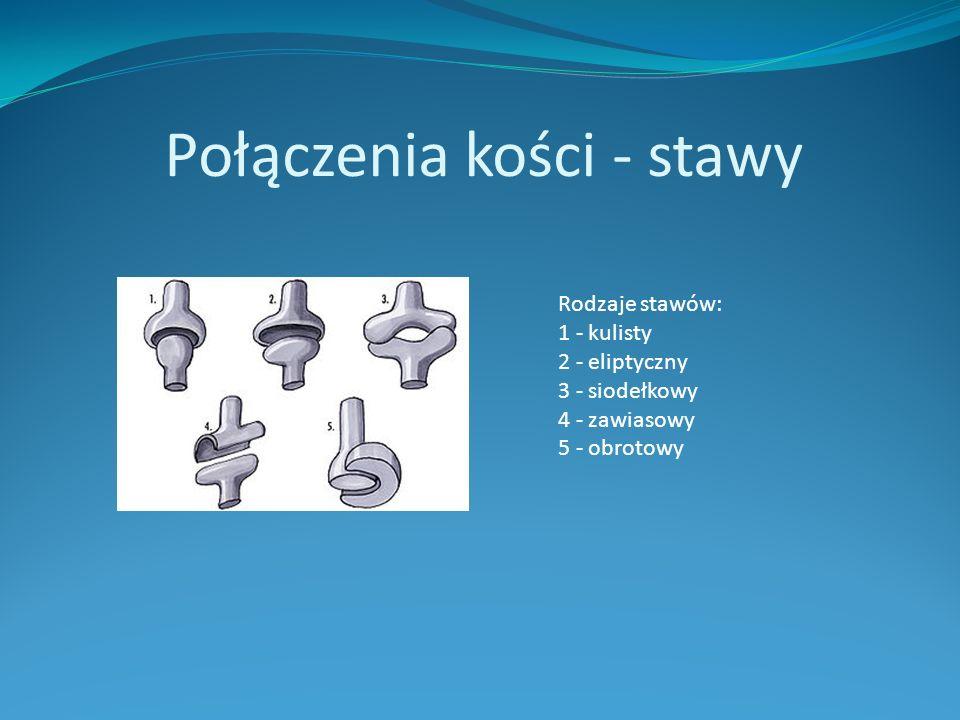 Połączenia kości - stawy Rodzaje stawów: 1 - kulisty 2 - eliptyczny 3 - siodełkowy 4 - zawiasowy 5 - obrotowy