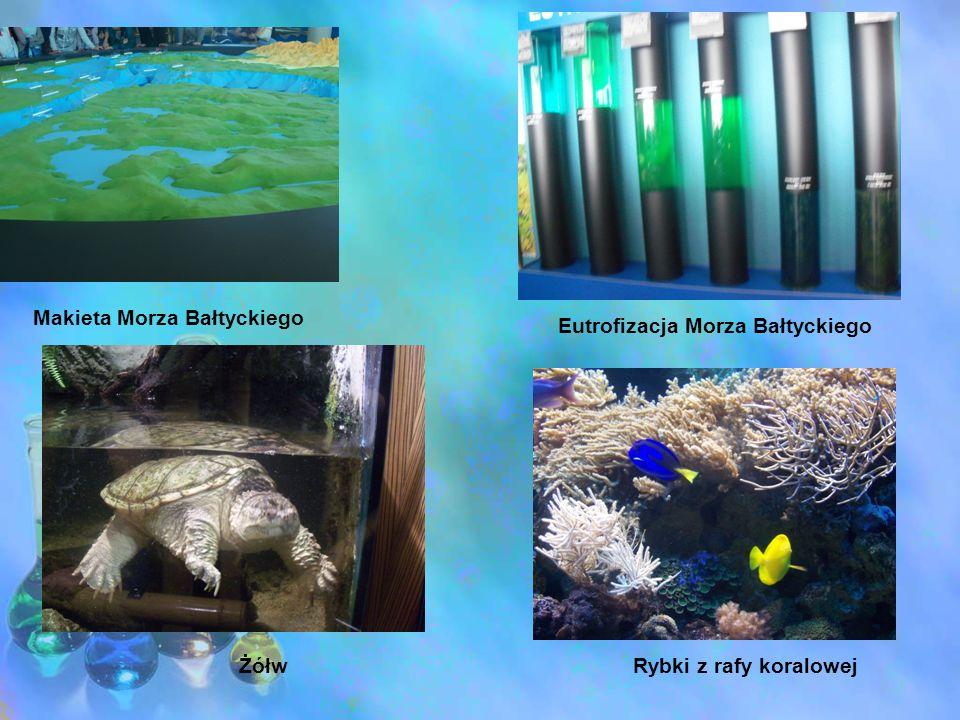 Makieta Morza Bałtyckiego Eutrofizacja Morza Bałtyckiego ŻółwRybki z rafy koralowej