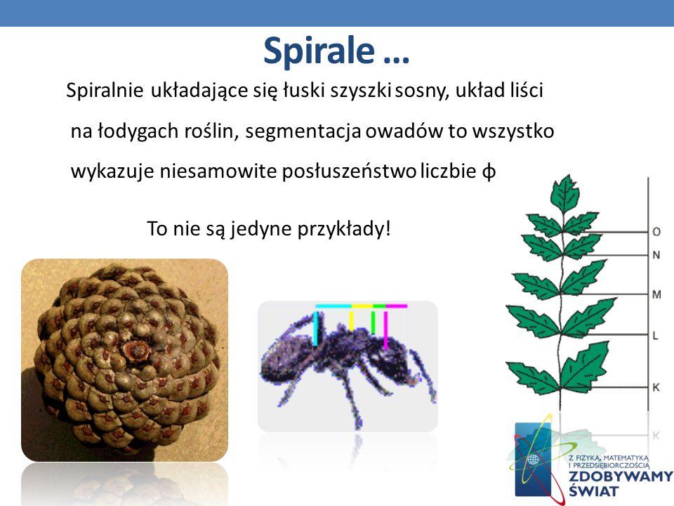 Spiralnie układające się łuski szyszki sosny, układ liści na łodygach roślin, segmentacja owadów to wszystko wykazuje niesamowite posłuszeństwo liczbie φ To nie są jedyne przykłady.