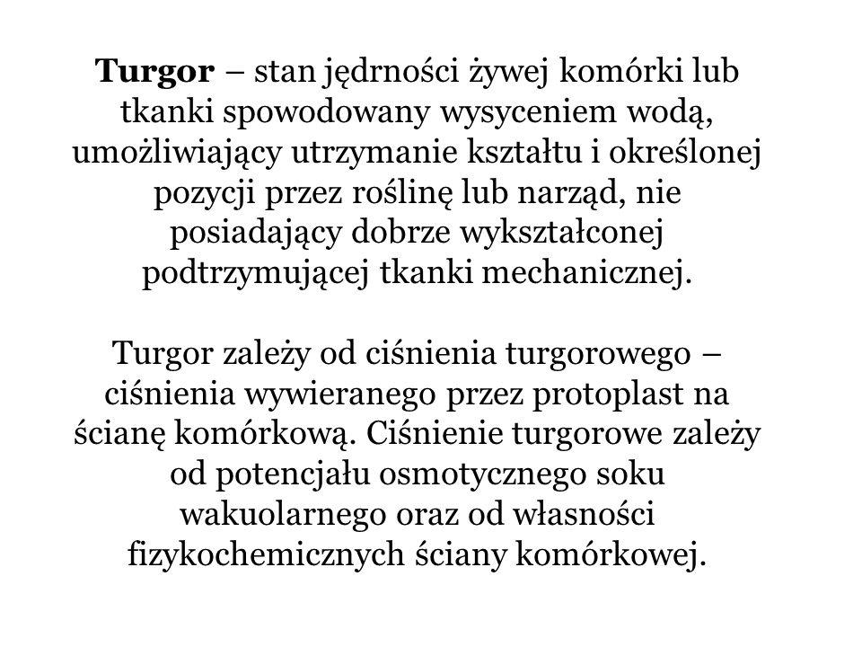 Turgor – stan jędrności żywej komórki lub tkanki spowodowany wysyceniem wodą, umożliwiający utrzymanie kształtu i określonej pozycji przez roślinę lub
