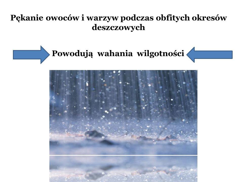Pękanie owoców i warzyw podczas obfitych okresów deszczowych Powodują wahania wilgotności