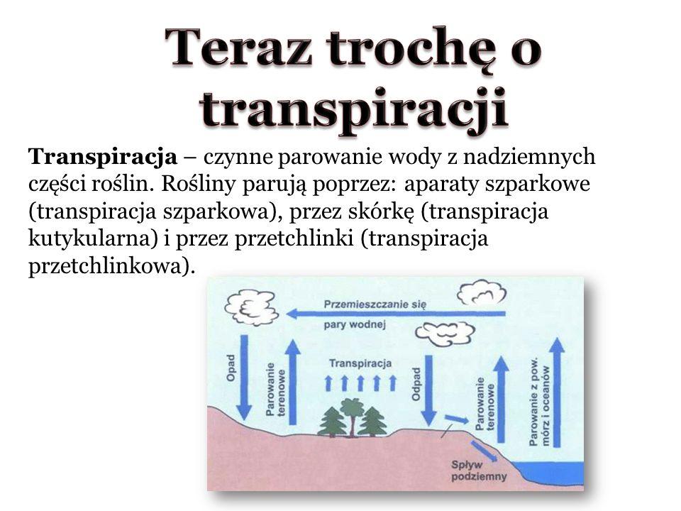 Transpiracja – czynne parowanie wody z nadziemnych części roślin.