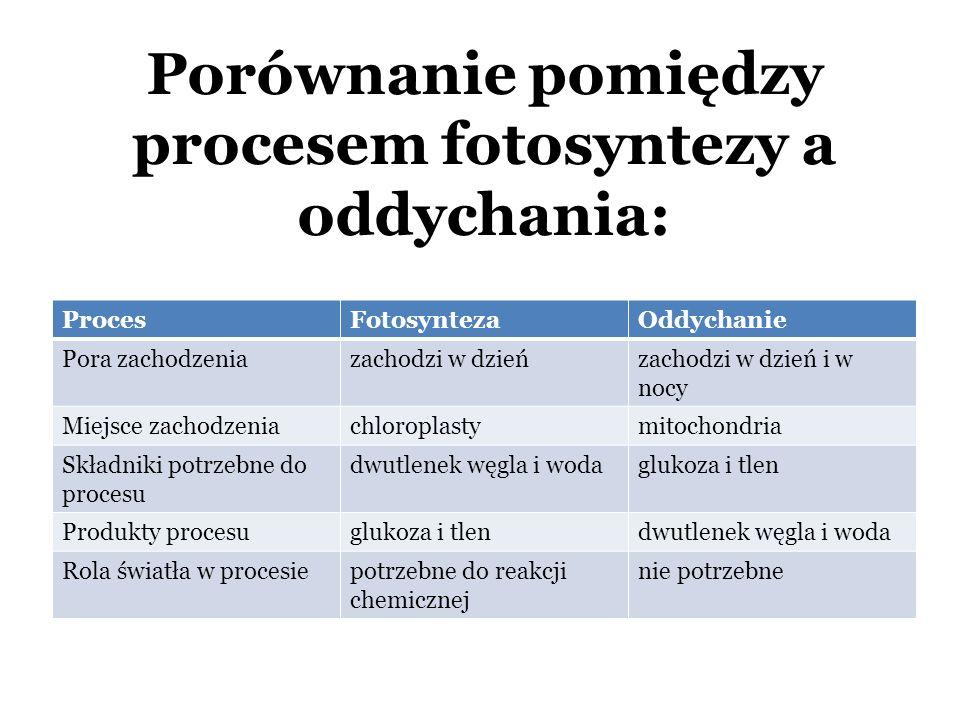 Porównanie pomiędzy procesem fotosyntezy a oddychania: ProcesFotosyntezaOddychanie Pora zachodzeniazachodzi w dzieńzachodzi w dzień i w nocy Miejsce zachodzeniachloroplastymitochondria Składniki potrzebne do procesu dwutlenek węgla i wodaglukoza i tlen Produkty procesuglukoza i tlendwutlenek węgla i woda Rola światła w procesiepotrzebne do reakcji chemicznej nie potrzebne