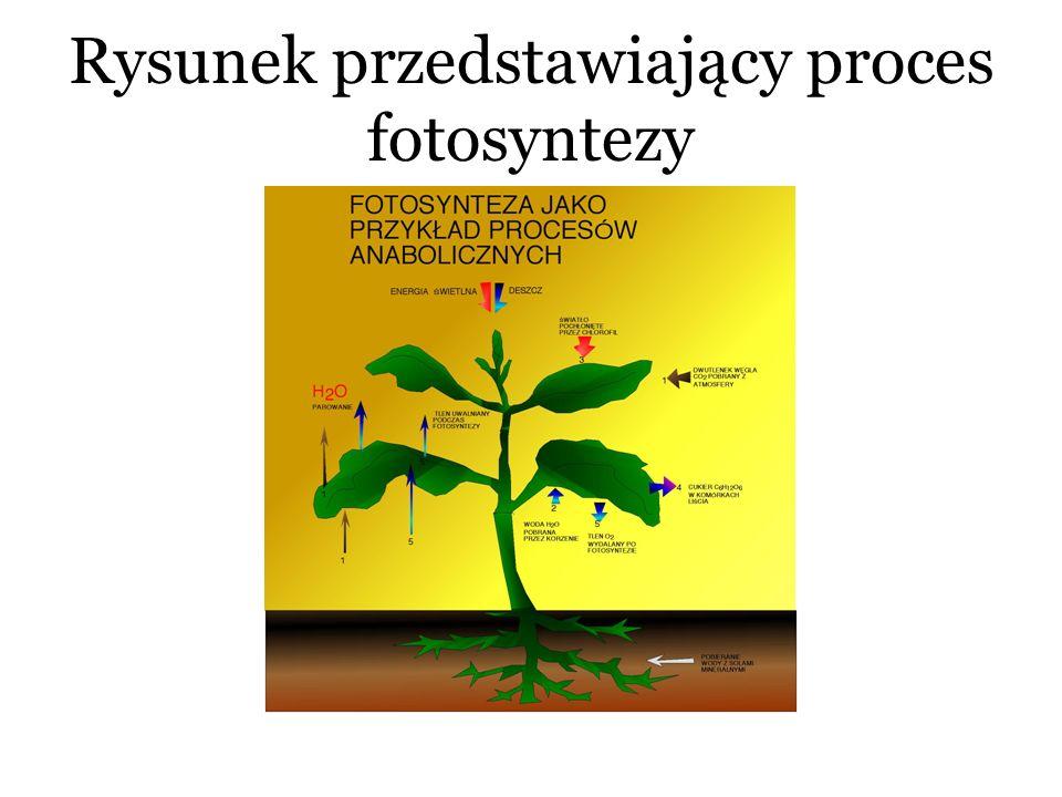 Rysunek przedstawiający proces fotosyntezy