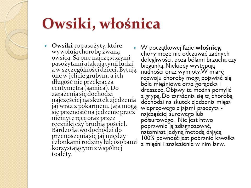Owsiki, włośnica Owsiki to pasożyty, które wywołują chorobę zwaną owsicą. Są one najczęstszymi pasożytami atakującymi ludzi, a w szczególności dzieci.