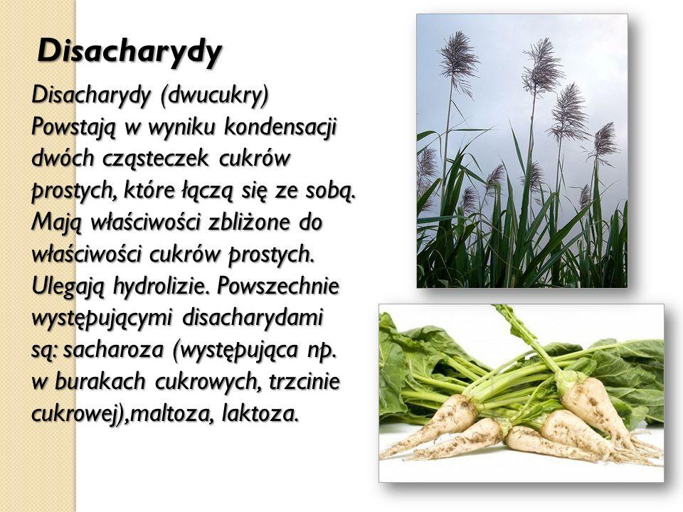 Disacharydy Disacharydy (dwucukry) Powstają w wyniku kondensacji dwóch cząsteczek cukrów prostych, które łączą się ze sobą. Mają właściwości zbliżone