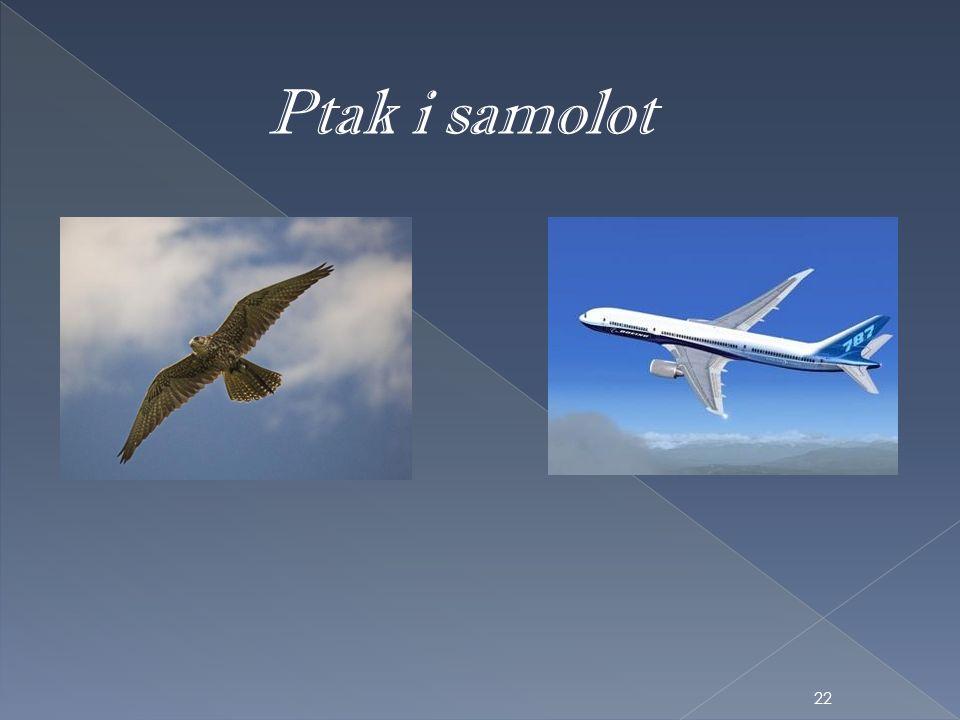Ptak i samolot 22