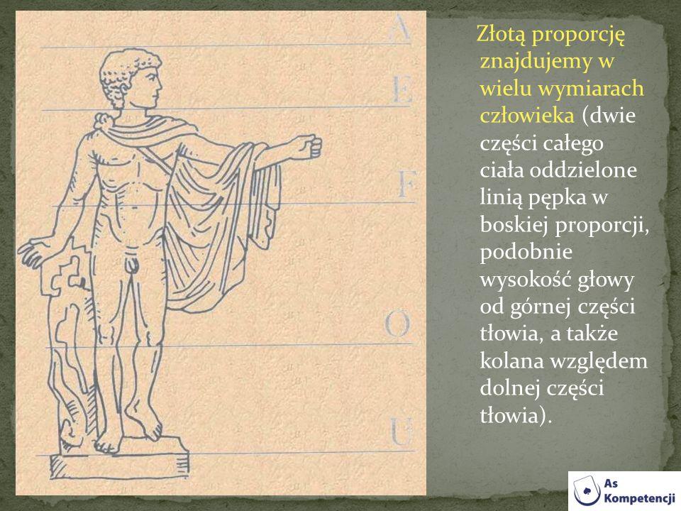 Złotą proporcję znajdujemy w wielu wymiarach człowieka (dwie części całego ciała oddzielone linią pępka w boskiej proporcji, podobnie wysokość głowy o