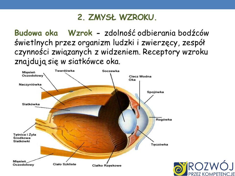 2. ZMYSŁ WZROKU. Budowa oka Wzrok - zdolność odbierania bodźców świetlnych przez organizm ludzki i zwierzęcy, zespół czynności związanych z widzeniem.