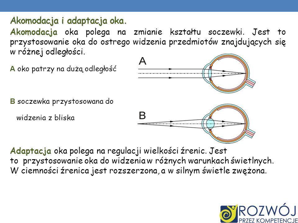 Akomodacja i adaptacja oka.Akomodacja oka polega na zmianie kształtu soczewki.