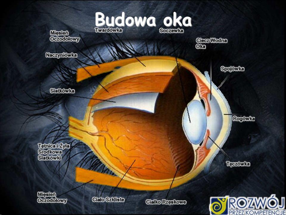 Akomodacja Nastawność oka zjawisko - dostosowania się oka do oglądania przedmiotów znajdujących się w różnych odległościach.
