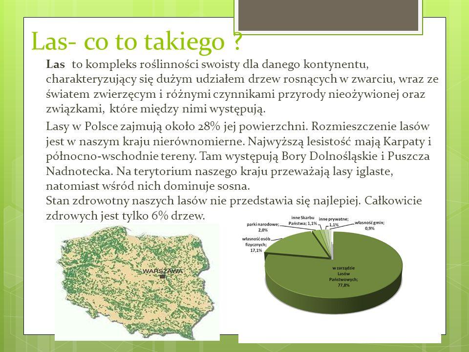 Piętra roślinności w lesie Piętra roślinności (piętra klimatyczno-roślinne) układ roślinności w górach, związany ze zmianą klimatu wraz ze wzrostem wysokości nad poziomem morza.