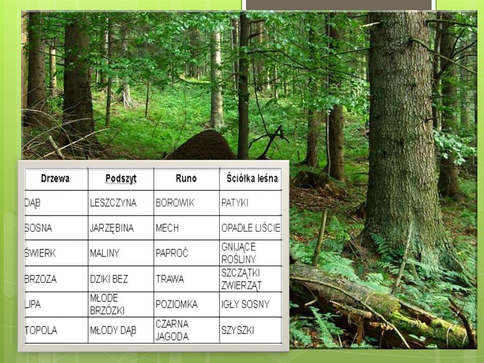 Funkcje lasu zwarta, wielowarstwowa roślinność ogranicza erozję gleb, chroniąc je przed nadmiernym nagrzewaniem i parowaniem utrzymywanie spoistości gleb i zapobieganie przenoszeniu się piasku i powstawaniu wydm regulacja stosunków wodnych, tzw.