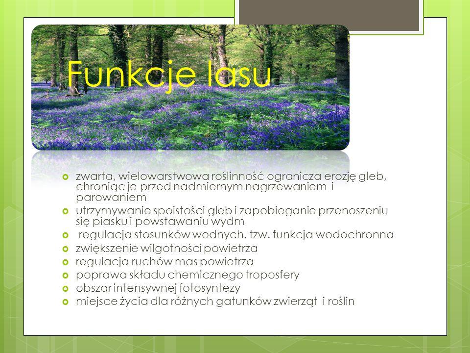 Lasy na Kujawach Centralna, rolnicza część Kujaw jest jednym z najmniej zalesionych regionów kraju (obecnie lasy to 15% powierzchni).