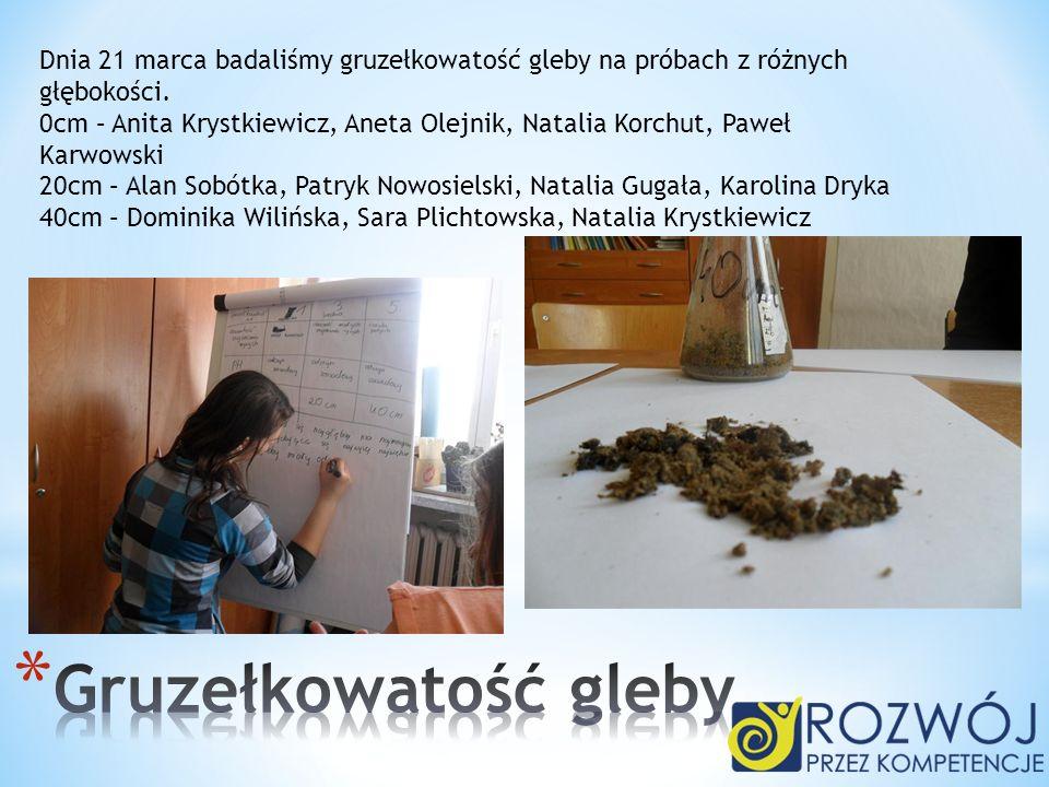Dnia 21 marca badaliśmy gruzełkowatość gleby na próbach z różnych głębokości. 0cm – Anita Krystkiewicz, Aneta Olejnik, Natalia Korchut, Paweł Karwowsk