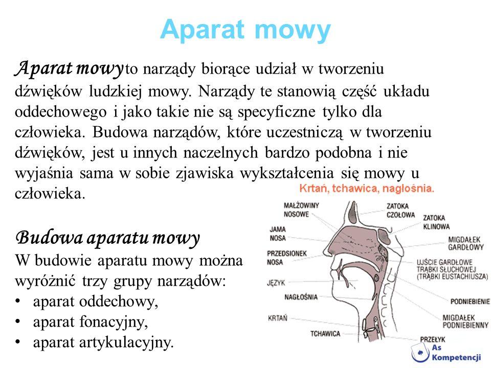 Aparat mowy Aparat mowy to narządy biorące udział w tworzeniu dźwięków ludzkiej mowy. Narządy te stanowią część układu oddechowego i jako takie nie są