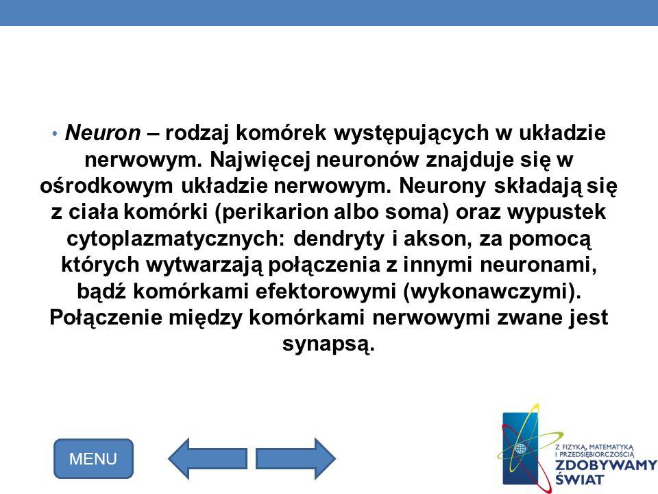 Neuron – rodzaj komórek występujących w układzie nerwowym. Najwięcej neuronów znajduje się w ośrodkowym układzie nerwowym. Neurony składają się z ciał